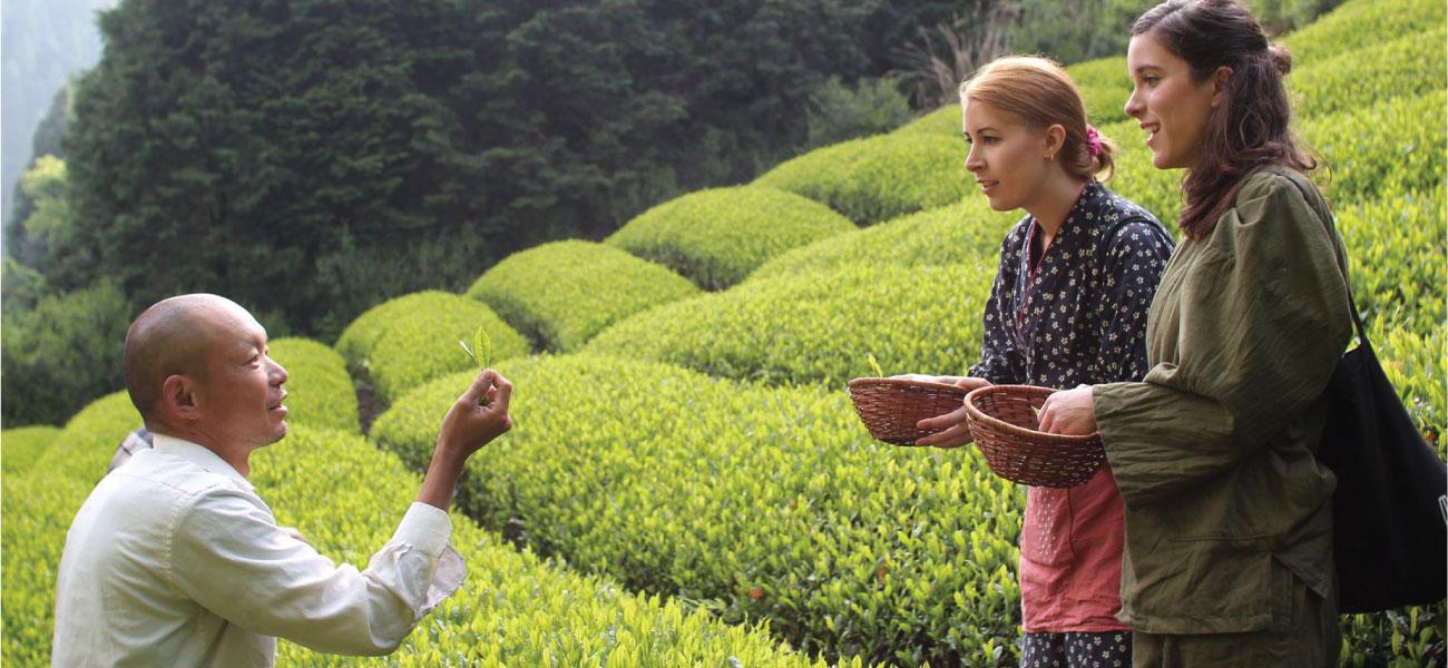 Tea Tours