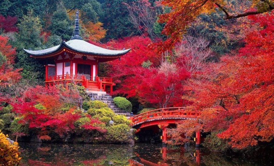 Paisajes del Tour de Té en Japón: Japan Tea Tour